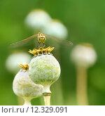 Купить «close up macro animals insect», фото № 12329091, снято 15 октября 2019 г. (c) PantherMedia / Фотобанк Лори