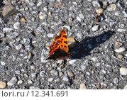 Купить «nature animal insect fauna butterfly», фото № 12341691, снято 15 октября 2019 г. (c) PantherMedia / Фотобанк Лори