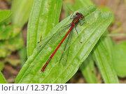 Купить «closeup bright shiny wing insect», фото № 12371291, снято 15 октября 2019 г. (c) PantherMedia / Фотобанк Лори