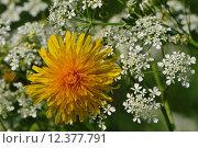 Купить «wing insect antenna honey pollen», фото № 12377791, снято 15 октября 2019 г. (c) PantherMedia / Фотобанк Лори