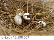Купить «Broken nest egg», фото № 12390567, снято 27 мая 2018 г. (c) PantherMedia / Фотобанк Лори