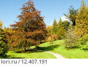 Купить «Осенний сезон в парке», фото № 12407191, снято 3 октября 2010 г. (c) Татьяна Кахилл / Фотобанк Лори