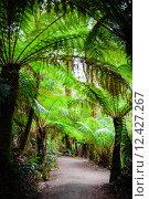 Купить «Maits Rest Rainforest Trail on Great Ocean Road, Australia», фото № 12427267, снято 18 ноября 2019 г. (c) PantherMedia / Фотобанк Лори