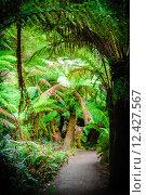 Купить «Maits Rest Rainforest Trail on Great Ocean Road, Australia», фото № 12427567, снято 18 ноября 2019 г. (c) PantherMedia / Фотобанк Лори