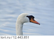 Купить «water bird swimming feather birds», фото № 12443851, снято 25 июня 2019 г. (c) PantherMedia / Фотобанк Лори