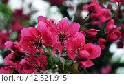 Купить «tree petals blossoms embellishment bleed», фото № 12521915, снято 22 января 2019 г. (c) PantherMedia / Фотобанк Лори