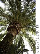 Купить «Palm Tree», фото № 12579419, снято 20 февраля 2019 г. (c) PantherMedia / Фотобанк Лори