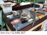 Кот - любитель зарубежной классики спит на книжном развале (2015 год). Редакционное фото, фотограф A Челмодеев / Фотобанк Лори
