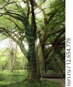 Купить «Лучи солнца пробивается сквозь раскидистое дерево, покрытое мхом», фото № 12654779, снято 15 июля 2004 г. (c) Евгений Ткачёв / Фотобанк Лори
