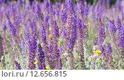 Купить «Сиреневые цветы качаются на ветру», видеоролик № 12656815, снято 9 сентября 2015 г. (c) Наталья Волкова / Фотобанк Лори