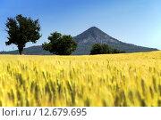 Купить «Wheat field in summer time, Hungary», фото № 12679695, снято 19 октября 2018 г. (c) PantherMedia / Фотобанк Лори