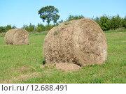 Рулоны сена лежат на зеленом лугу. Стоковое фото, фотограф Ирина Борсученко / Фотобанк Лори