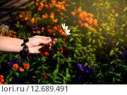 Ромашка в женской руке. Стоковое фото, фотограф Наталья Буравлева / Фотобанк Лори