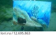 Купить «Картина под водой в озере Байкал», видеоролик № 12695863, снято 5 сентября 2014 г. (c) Некрасов Андрей / Фотобанк Лори