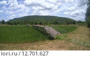 Купить «Бамбуковый мост через рисовое поле в провинции Лоей, Таиланд», видеоролик № 12701627, снято 25 июня 2015 г. (c) KEN VOSAR / Фотобанк Лори