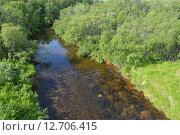 Купить «Река Нама-Йоки в Мурманской области. Летний пейзаж», фото № 12706415, снято 18 июля 2015 г. (c) Ирина Борсученко / Фотобанк Лори