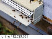 Пчелы у современного летка (2015 год). Редакционное фото, фотограф Анатолий Матвейчук / Фотобанк Лори