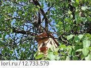 Птенец в скворечнике. Стоковое фото, фотограф Наталья Гуреева / Фотобанк Лори