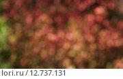 Боке, листья. Стоковое видео, видеограф Дмитрий Кузьмин / Фотобанк Лори