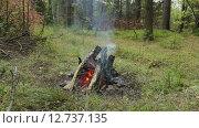 Костёр в лесу. Стоковое видео, видеограф Дмитрий Кузьмин / Фотобанк Лори