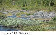 Купить «Затопленные участки тундрового леса в долине реки Кунийок, Хибинские горы», видеоролик № 12765975, снято 1 сентября 2015 г. (c) Кекяляйнен Андрей / Фотобанк Лори