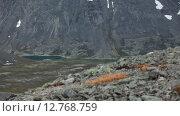 Купить «Горная дорога в каньоне, вид с вершины горы. Путь в долину Кунийок, Хибины. Кольский полуостров», видеоролик № 12768759, снято 2 сентября 2015 г. (c) Кекяляйнен Андрей / Фотобанк Лори
