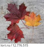 Купить «Осенние кленовые листья на деревянном фоне», фото № 12776515, снято 22 сентября 2015 г. (c) Олейникова Галина / Фотобанк Лори