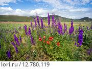 Полевые цветы на фоне гор. Стоковое фото, фотограф Алексей Маринченко / Фотобанк Лори