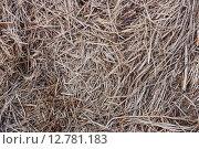 Текстура высушенной травы, сено. Стоковое фото, фотограф Дарья Андрианова / Фотобанк Лори