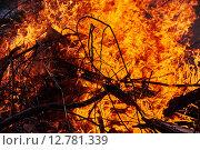 Оранжевое пламя, горящее дерево. Стоковое фото, фотограф Дарья Андрианова / Фотобанк Лори