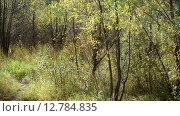 Купить «Заросли ивы в начале осени», видеоролик № 12784835, снято 30 сентября 2015 г. (c) Володина Ольга / Фотобанк Лори