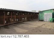 Купить «Приют для бездомных животных, собаки в вольерах», фото № 12787403, снято 14 октября 2012 г. (c) Елена Мусатова / Фотобанк Лори