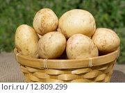 Купить «Свежий картофель в корзине на даче», эксклюзивное фото № 12809299, снято 3 августа 2015 г. (c) Елена Коромыслова / Фотобанк Лори