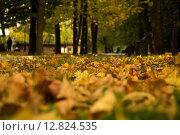 Золотая осень. Стоковое фото, фотограф Скрипник Анастасия / Фотобанк Лори