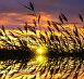 Тростник на фоне закатного неба, фото № 12830363, снято 4 сентября 2015 г. (c) Икан Леонид / Фотобанк Лори