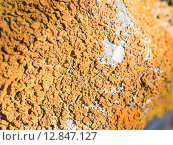Купить «lichens marine rocks», фото № 12847127, снято 19 октября 2018 г. (c) PantherMedia / Фотобанк Лори