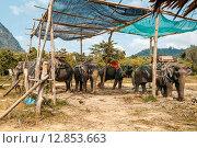 Слоны на стоянке в джунглях.Таиланд. Стоковое фото, фотограф fjodorov vladimir / Фотобанк Лори