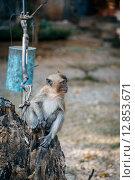 Маленькая обезьянка. Стоковое фото, фотограф fjodorov vladimir / Фотобанк Лори