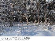 Купить «Зимний пейзаж», эксклюзивное фото № 12853699, снято 18 января 2014 г. (c) Елена Коромыслова / Фотобанк Лори