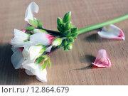 Цветы герани на столе. Стоковое фото, фотограф Аня Шумкова / Фотобанк Лори