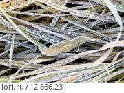 Купить «Капли и иней на траве в первый заморозок», фото № 12866231, снято 10 октября 2015 г. (c) Алексей Маринченко / Фотобанк Лори