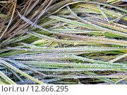 Купить «Первый иней на траве поздней осенью», фото № 12866295, снято 10 октября 2015 г. (c) Алексей Маринченко / Фотобанк Лори
