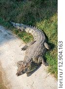 Купить «Крокодил у пруда», эксклюзивное фото № 12904163, снято 16 сентября 2015 г. (c) Александр Щепин / Фотобанк Лори