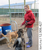Купить «Волонтер работает с собакой в приюте», фото № 12906427, снято 7 сентября 2012 г. (c) Елена Мусатова / Фотобанк Лори