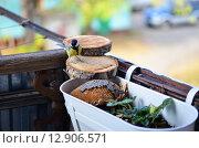 Синичка прилетела в гости на балкон полакомится семенами подсолнуха осенью. Стоковое фото, фотограф Svetlana Agaeva / Фотобанк Лори