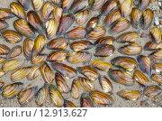 Купить «Фон из раковин перловицы на песке», эксклюзивное фото № 12913627, снято 26 августа 2015 г. (c) Елена Коромыслова / Фотобанк Лори