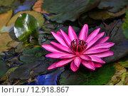 Купить «Водяная лилия», фото № 12918867, снято 25 декабря 2010 г. (c) Морозова Татьяна / Фотобанк Лори