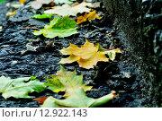 Купить «Опавшие кленовые листья», фото № 12922143, снято 10 декабря 2018 г. (c) Зезелина Марина / Фотобанк Лори