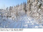 Купить «Заснеженный лес в солнечный день», эксклюзивное фото № 12923087, снято 18 января 2014 г. (c) Елена Коромыслова / Фотобанк Лори