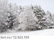 Купить «Зимний лес после снегопада», эксклюзивное фото № 12923103, снято 2 марта 2013 г. (c) Елена Коромыслова / Фотобанк Лори